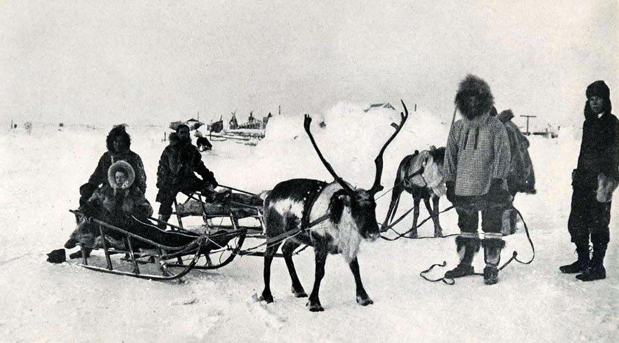 Arktischer Grand Prix: Wenn Rentiere rennen