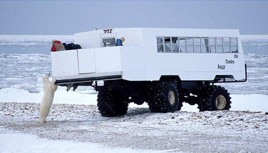 Tundra Buggy: Der mit den Eisbären tanzt