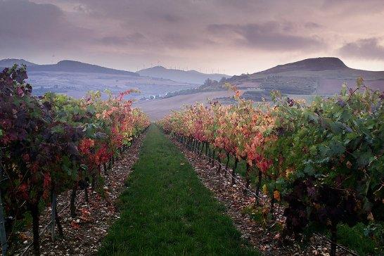 Señorío de Otazu: Eine Kathedrale für Kunst und Wein