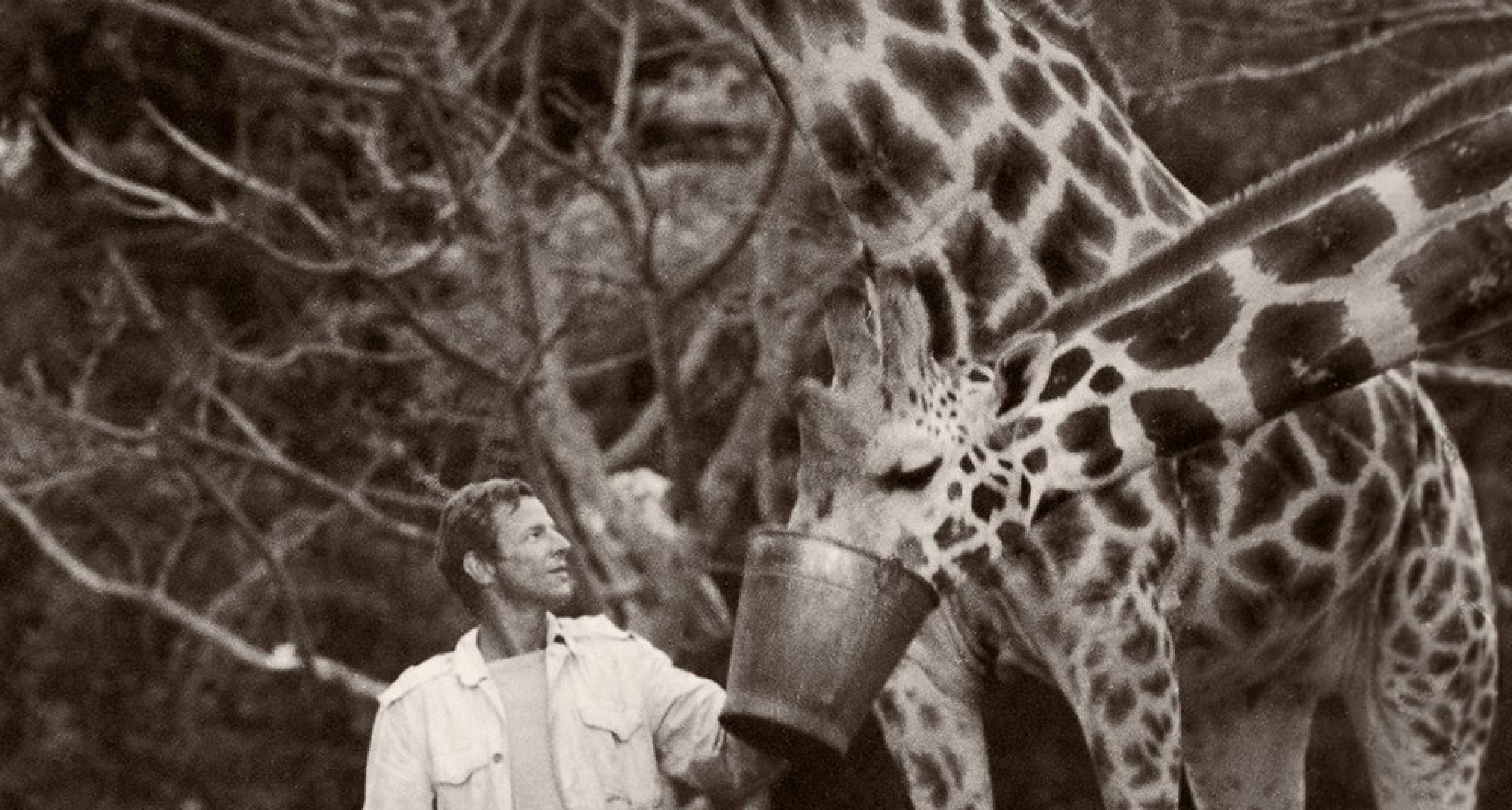 Peter Beard and giraffes, Hog Ranch front lawn, 1985 © 2020 Peter Beard